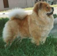 Моя Собака - Итакуни